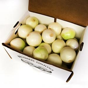Wholesale Onion Sets   Onion Boy Inc