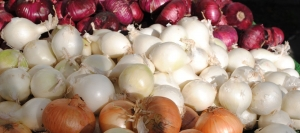 wholesale onion sets